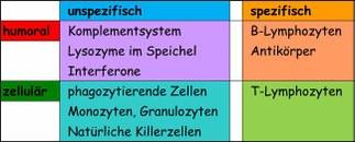 Abwehrsystem g.jpg