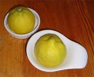 Zitrone 4_m.jpg