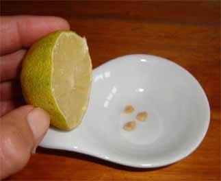 Zitronenkerne