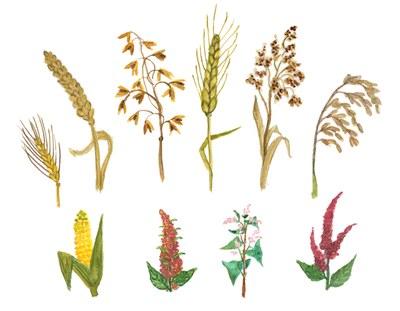 Getreide und Hülsenfrüchte